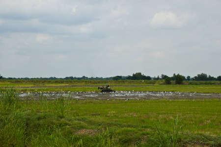 singburi: landscape Singburi Thailand