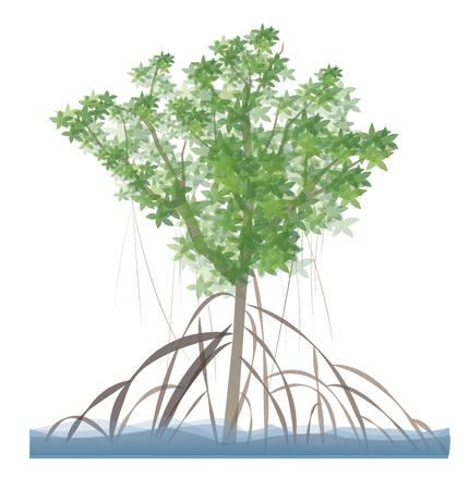 マングローブの木