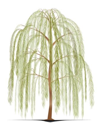 Weinender Weidebaum
