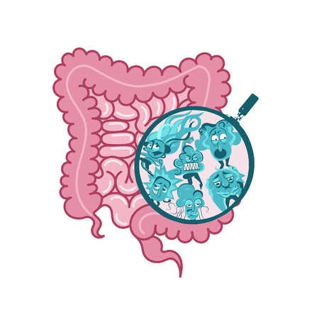 The internal vector.Digestive system, intestine symbol.Viscera, inside organs vector.Microscopic bacteria.