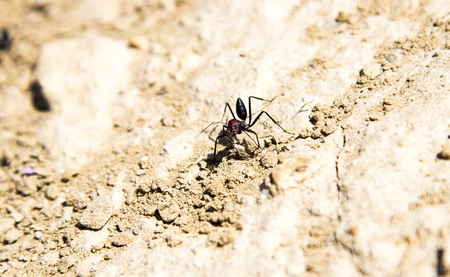 hideout: Ants coming out of their hideout Stock Photo