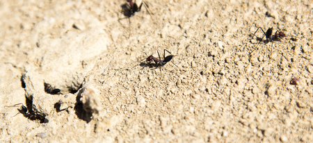 Ants coming out of their hideout Stock Photo