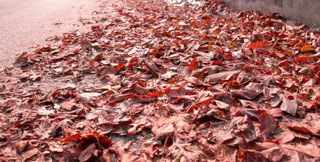 red fallen leaves lie on the road or sidewalk