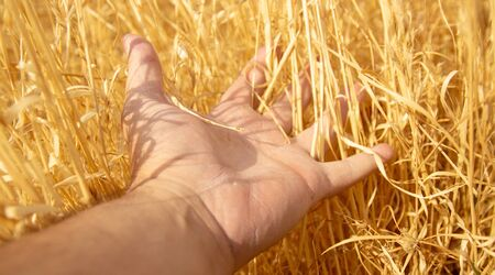 Hay or dry grass (golden) at hand, touch some grass. I feel lonely and nature