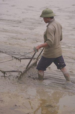 harrow: Passage of the harrow in the rice field