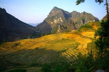 karst: Fields in espalier in  the karst area