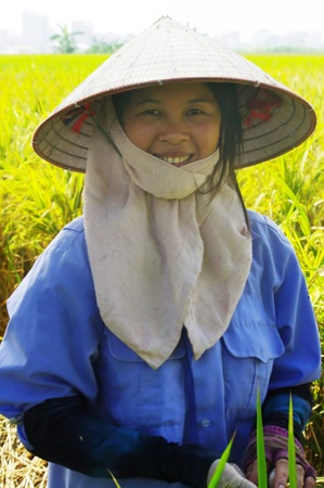 conical hat: This woman works in the paddy field. Despite the heat it has the face covered by a towel. With the traditional conical hat protects her facefrom the sun. The criterion of beauty for women in Asia is to have very white skin