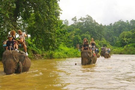 In northern Thailand elephants are used to tourists walking in the forest. A walk of an hour when the caravan moves on the river before returning to boarding. tourists seated in pairs in the basket are buffeted by movements of the elephant while walking.
