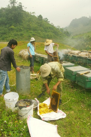 remained: These Vietnamese beekeepers work without protection  It removes the hurdles to collect honey bees and pushes with a palace that remained on the shelf Editorial
