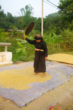 This grandmother valve Thai corn to remove impurities  She performed as her ancestors with a manual van  photo