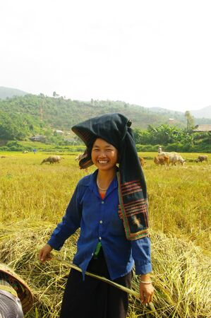 This woman of the ethnic Thai black beats the sheaf of rice