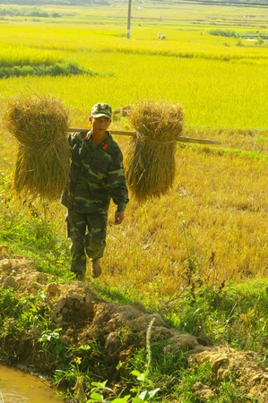 stockade: This young soldier carries sheaves of rice with a stockade  He came to help her family harvest