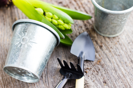 Gardening tools and hyacinth flower. Spring and summer cultivating plants. Earth environment and nature growing close up. Banco de Imagens