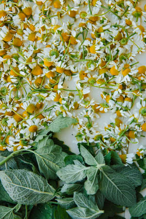 Flat image of meadow chamomile flowers and green mint leaves on a white tray. Flat lay. High quality photo