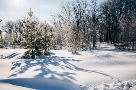 Winter frosty landscape at noon. Trees and Trees, Christmas are covered with frost. He trees fall long shadows on the snowdrifts. High quality photo Stock Photo