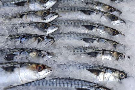 Vissen op ijs  Stockfoto