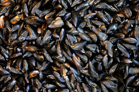 mussels: blue mussels at the fish merchant in Normandy Stock Photo