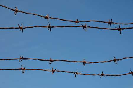 barb wire: close up of barbed wire on a blue sky