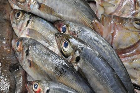 daurade: fish in a French fish shop Stock Photo