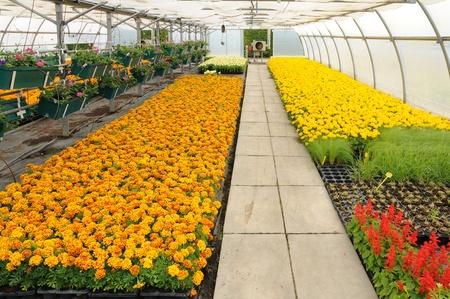 bloemen in een kas in Frankrijk Redactioneel