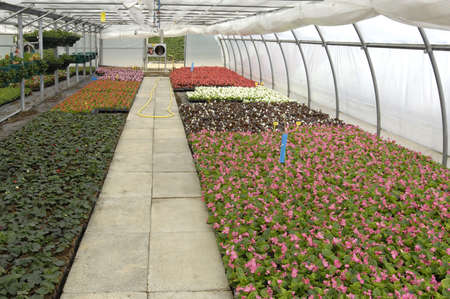 convection: flowers in a greenhouse in France Editorial