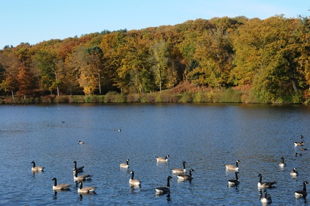 anima: France, ducks on a pond in automn