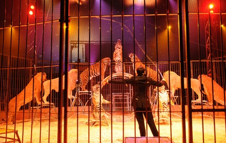 animal trainer in a circus, horizontal picture