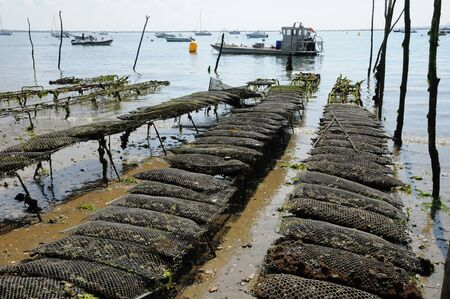 herbe: France, oyster farming on the coast of l Herbe Editorial