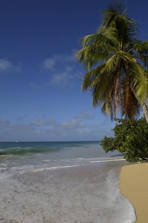 martinique: France, Martinica, Salines playa en Sainte-Anne