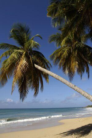 martinique: Francia, Martinica, Salines playa en Sainte Anne