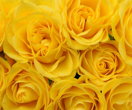 close up of yellow roses on the market photo