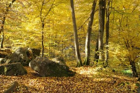 vaux: France, Les Vaux de Cernay in Chevreuse valley
