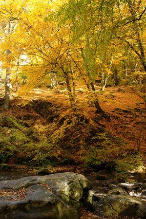 France, Les Vaux de Cernay in Chevreuse valley Stock Photo - 13288290