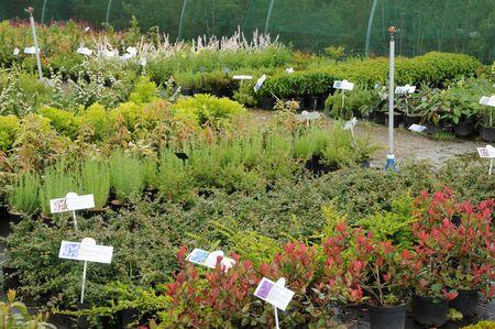 France, une pépinière de plantes en Bretagne