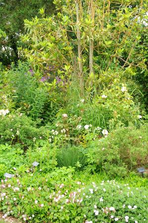 cotes d armor: France, le Jardin Lepage in Pleumeur Bodou Stock Photo