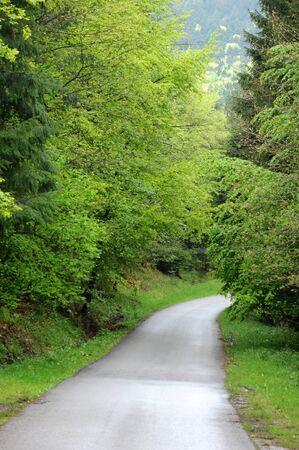 haut rhin: Francia, una peque�a carretera cerca de Riquewihr en Haut Rhin Foto de archivo