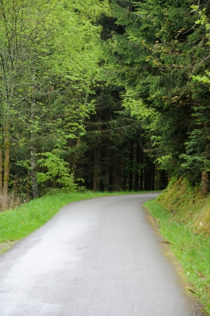 haut rhin: France, a small road near Riquewihr in Haut Rhin