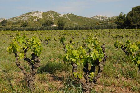 les: France, landscape of Les Alpilles in Provence Stock Photo