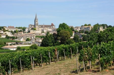 フランス、アキテーヌ地域圏のサン テミリオンのブドウ畑 写真素材