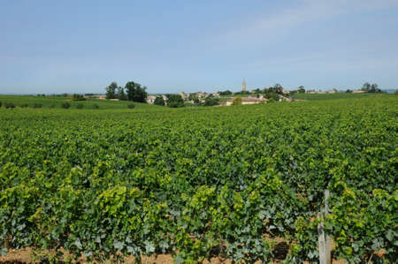 aquitaine: France, vineyard of Saint Emilion in Aquitaine