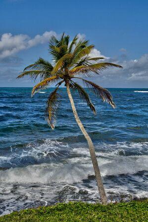martinique: la costa de Sainte Marie en Martinica Foto de archivo