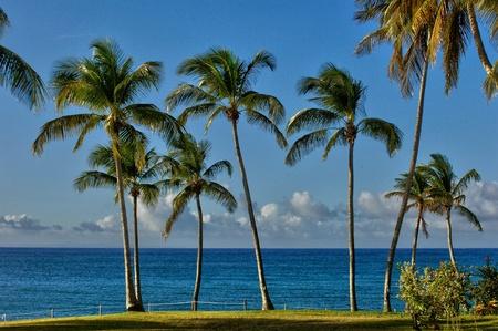 martinique: la costa de Le Diamant en Martinica Foto de archivo
