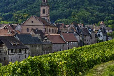 haut: France, vineyard of Riquewihr in Alsace