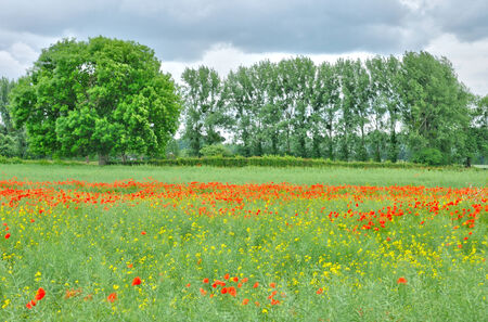 bois: France, poppies in a field by Bois Guilbert in Normandie Stock Photo