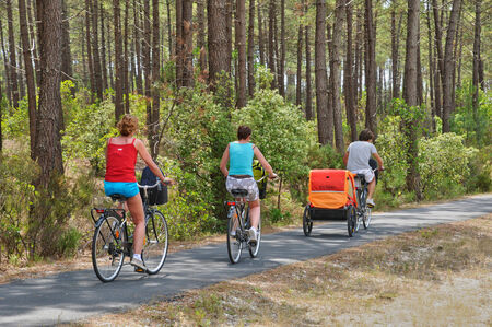 landes:  France, cyclist and maritime pines in La foret des Landes
