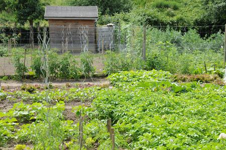 allotment: Ile de France, allotment garden in Les Mureaux