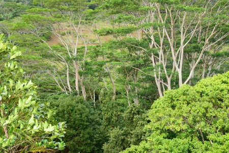 mauritius: Africa, the Chamarel landscape in Mauritius Island Stock Photo