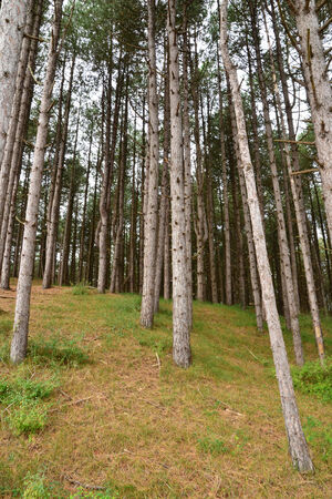 plage: France, the picturesque forest of Fort Mahon Plage Stock Photo
