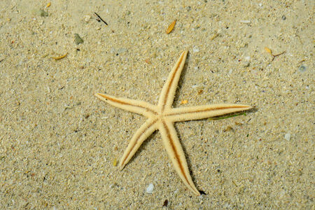 ocea: Africa, sea star in the picturesque egret island in Blue Bay near Mahebourg