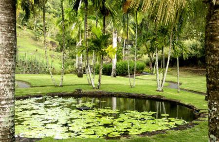 touristy: France, the picturesque Habitation Anse Latouche garden in Martinique